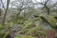 The Tangle Boulders inside Wistmans wood